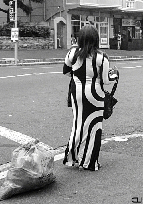 Urban Zebra (4)