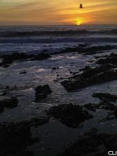 Ship, Gull, Sunset - Cape Town