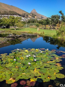 Lion's Head and Water Lilies.