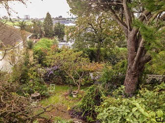 Magical garden, high above Green Point.