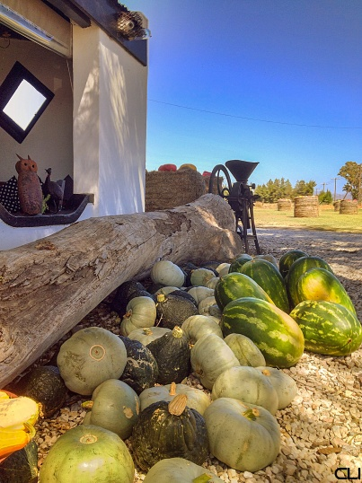 Gourds and melons