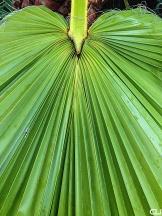 Palm in Montagu.