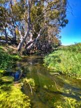 rivertrees01_pvw