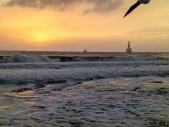 Sunset, Gull, Ships